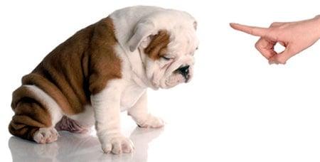 cachorro regañado