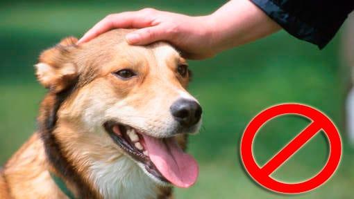 acariciar la cabeza de un perro desconocido