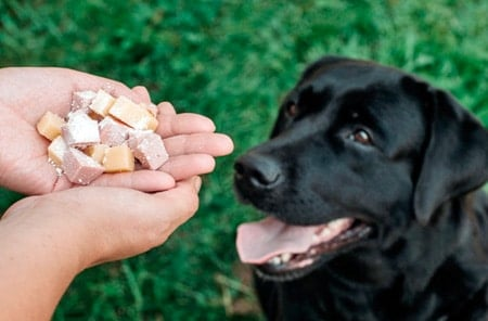 humano dando veneno a un perro