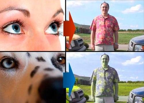 colores que ve un perro