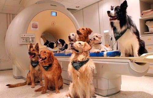 perros en radioterapia contra el cancer