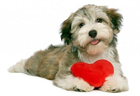 perro con amor