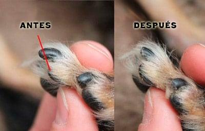 antes y despues de cortar las uñas
