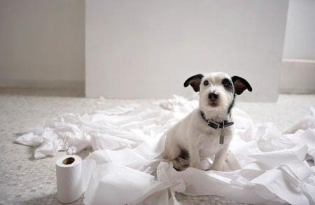 perro ha roto papel de baño