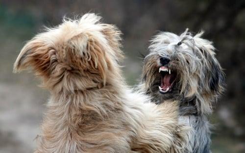 perros mordiendose