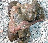 caca de perro con mucosidad y parásitos
