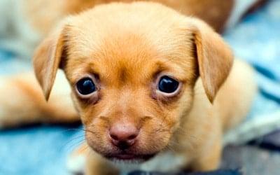 cachorro recien nacido