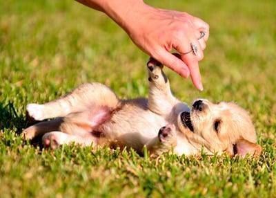 cachorrito feliz
