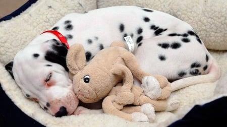 cachorro durmiendo en su cama