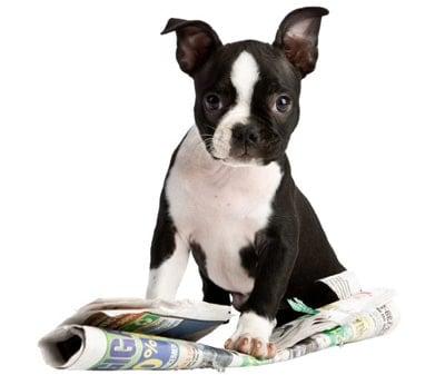 cachorro haciendo pis en papel de periodico