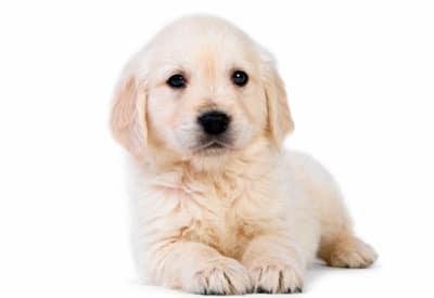 cachorro sin nombre