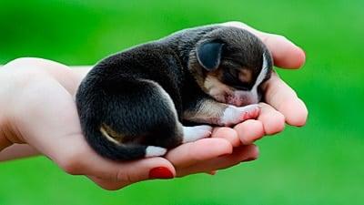 cachorro en manos