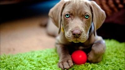 cachorro con un mes de vida