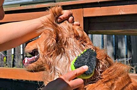 eliminar pelo muerto del perro