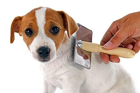 cepillando a un perro