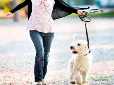 enseñar a pasear a un perro