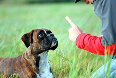 corregir a un perro y educarlo
