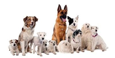 cómo ser un macho alfa frente a tu perro