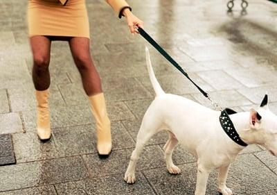 enseñar a un perro quien manda