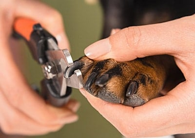 cortando las uñas de mi perro