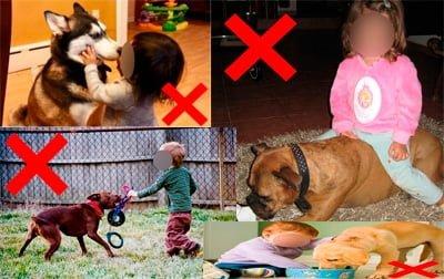 cosas que un niño no debe hacer a un perro