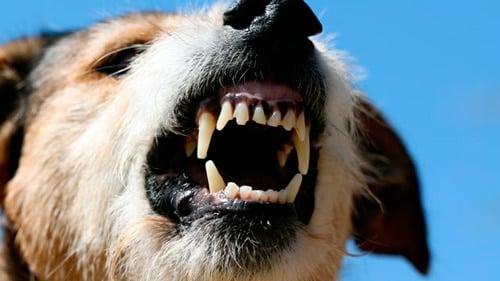 perro mostrando sus dientes