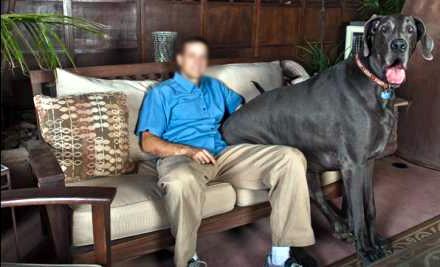 el perro mas grande del mundo george sentado