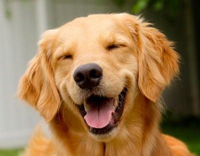 esterilizacion en perro macho