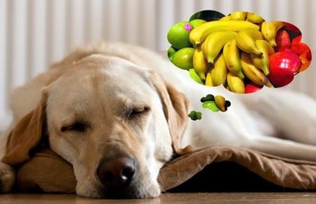 Vitamines pour chiens