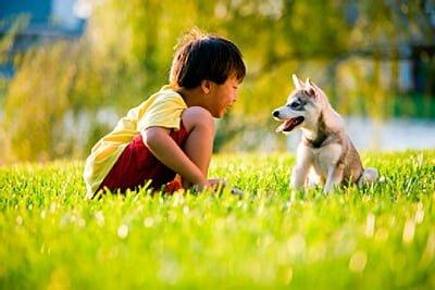 niño y cachorro jugando