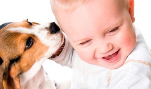 perro lamiendo a bebe