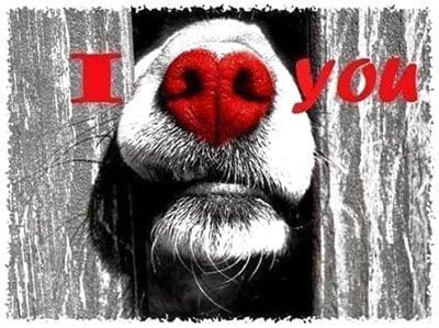 te quiero perro