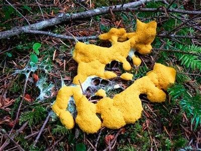 perro vomitado algo amarillo