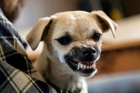 Resultado de imagen para perros huelen el miedo