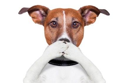 perro tapandose la boca