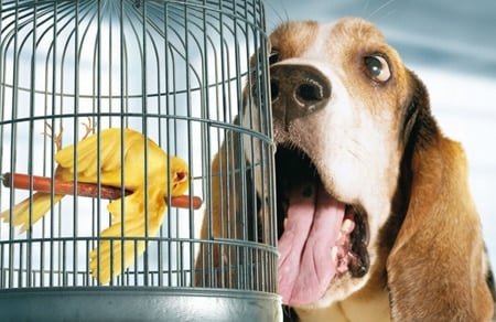 perro con mal aliento