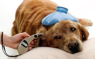 síntomas del moquillo en los perros
