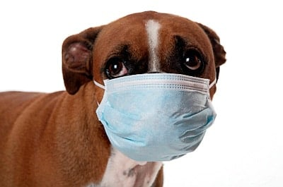 perro enfermo de moquillo