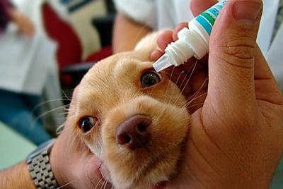 perro con problemas en el ojo