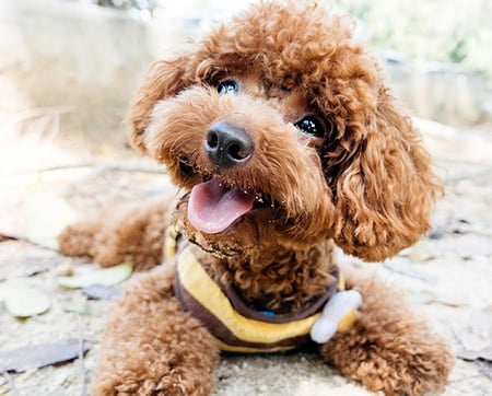 perro con la mirada feliz
