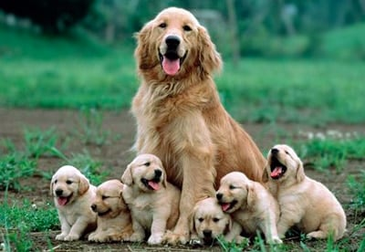 perra con sus cachorros