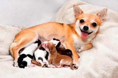 cachorros con su madre después de parir