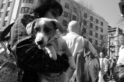 perro en brazos