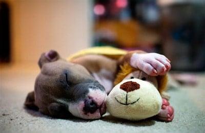 como despertar a un perro dormido