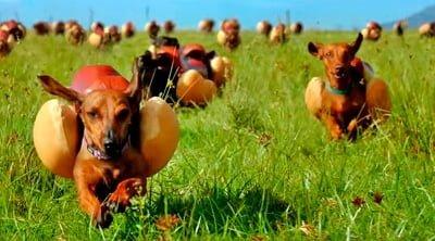 perro soñando y corriendo