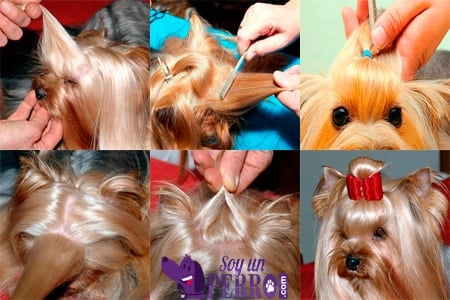 pasos para poner un lazo a un perro