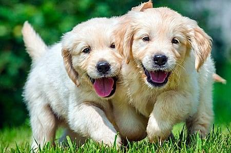 perritos alegres