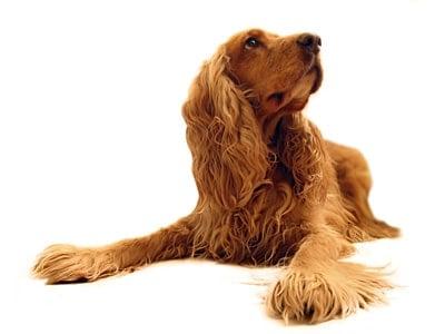 perro despúes de comer pienso