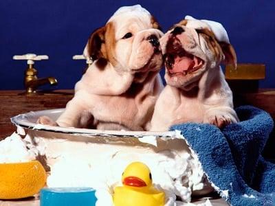 perros bañandose