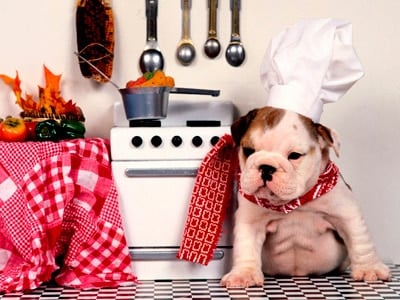 perro comidas toxicas